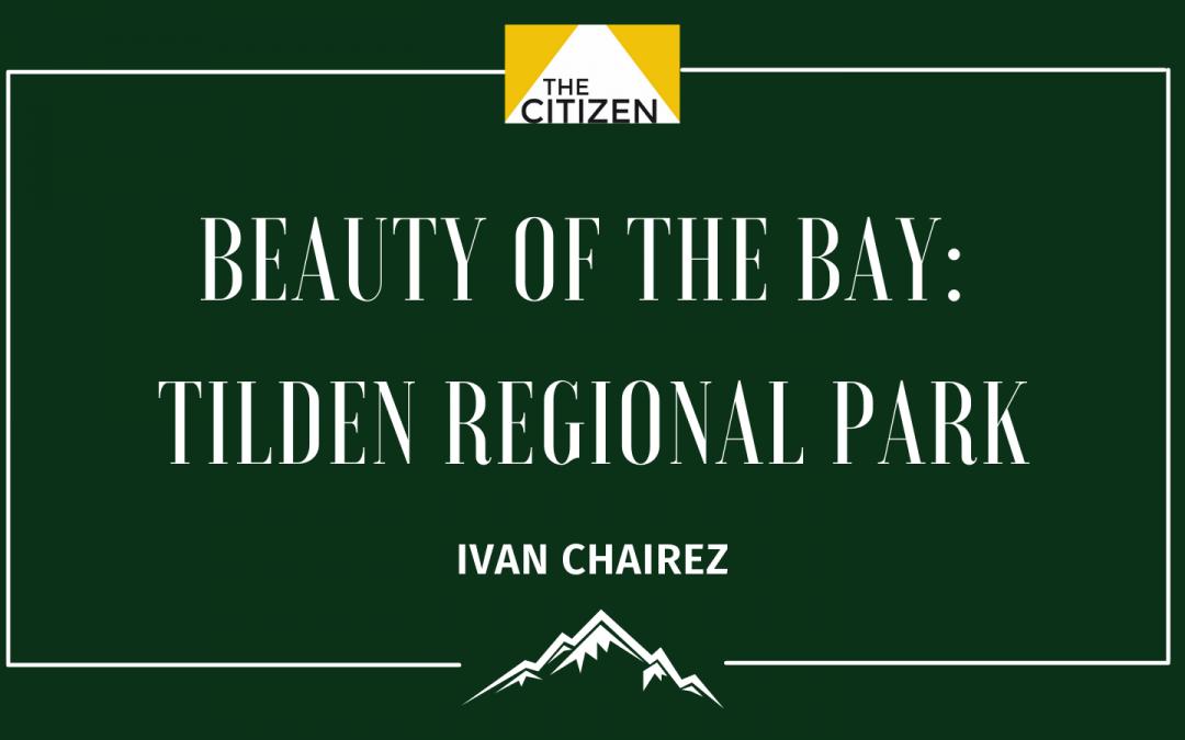 Beauty of the Bay: Tilden Regional Park